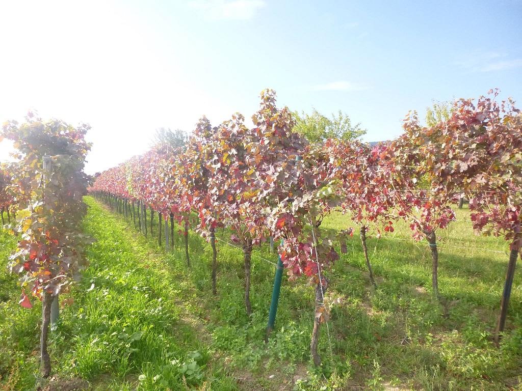 Gut zu wissen – 4 Tipps für… Landau in der Pfalz