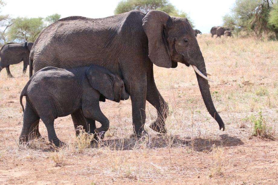 Eindrücke aus Tansania